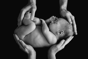 Cute newborn baby in the father's and mother's hands