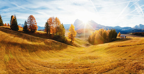 Fotomurales - Magical image of larch on the slopes of the hills. Location place Seiser Alm or Alpe di Siusi, South Tyrol, Italy. Europe.