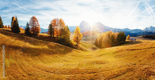 Wall mural Magical image of larch on the slopes of the hills. Location place Seiser Alm or Alpe di Siusi, South Tyrol, Italy. Europe.