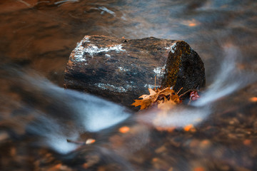 River in the woods in autumn, Indian Summer