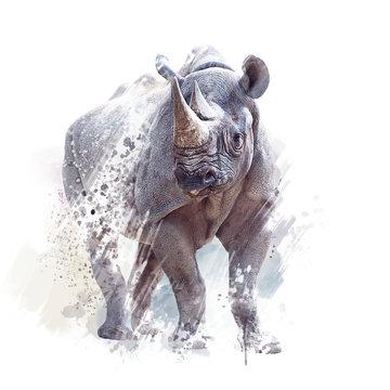 black rhinoceros watercolor on white background