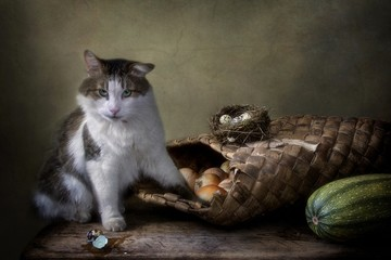 Still life with vegetables  and quail eggs and curious cat