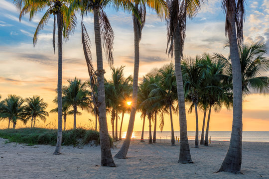 Sunrise at tropical beach with coco palms by the ocean beach in Florida Keys