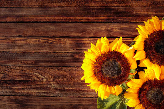 Blooming sunflowers on a rustic wooden background, overhead view.
