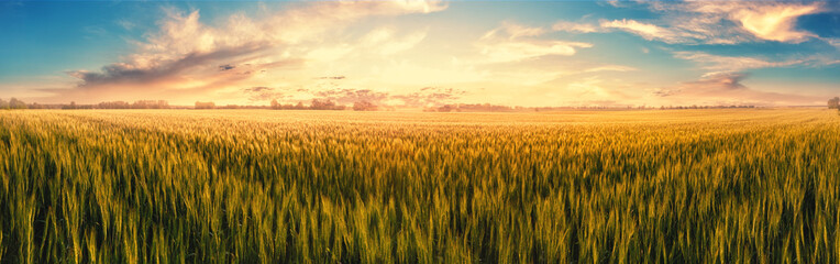 Photo sur Toile Culture Field with ears of wheat at sunset