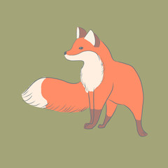 The fox stands and looks into the distance. Flat illustration. Character.