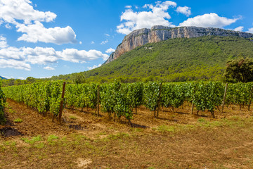 vineyard in france, Pic Saint-Loup