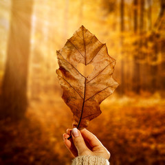 Woman hand with brown leaf and free space for your decoration