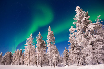 Northern lights snowy trees landscape, Aurora Borealis in Lapland, Finland