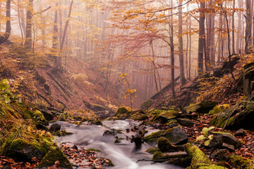 Small river stream in the autumn foggy forest.  Beautiful autumn landscape. Long exposure. Fototapete