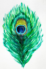 Illustration hand drawn Peacock feather on white background in acrilic. Beautiful drawing of a turquoise feather pattern of a bird.