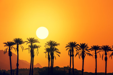 Row of tropical palm trees against the mountains at golden sunset. Silhouette of tall palm trees in the evening. Tropical evening landscape. Beautiful tropical nature