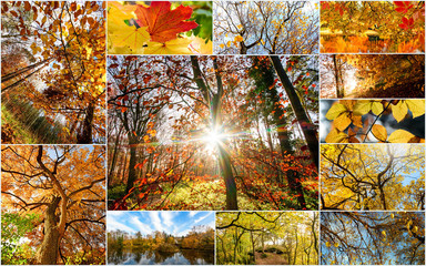 Autumn nature collage with different fall pictures: Beautiful morning scenes in the forest, different landscapes, compositions, colorful leaves with sun rays through branches of trees.