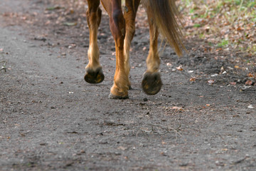 The legs of a horse. Outdoor riding.