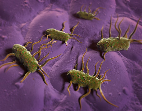 3D illustration of bacterium Listeria monocytogenes gram-positive bacterium with flagella which causes listeriosis