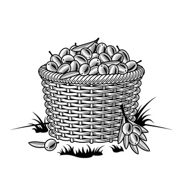 Retro basket of olives black and white. Editable vector illustration with clipping mask in woodcut style.