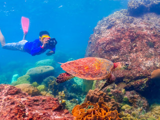 Diver taking pictures of sea turtles under the sea. Beautiful under the sea of Samaesan, Sattahip Thailand