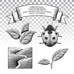 Scratchboard Style Ink Drawings of Leaves and Ladybug