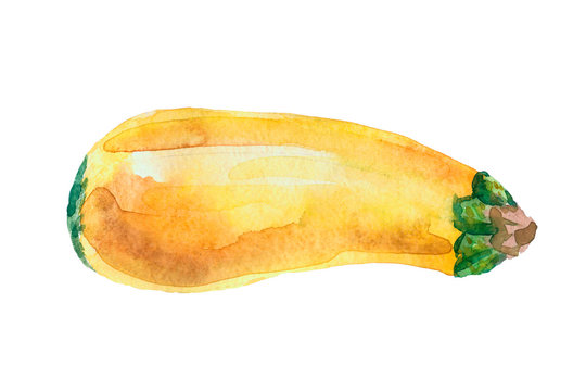 Watercolor squash isolated on a white background