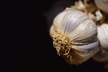 Close-up of a white tuber of garlic on a garlic braid in front of dark background with text field