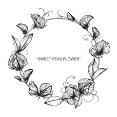 Sweet pea flower and leaf drawing illustration with line art on white backgrounds.