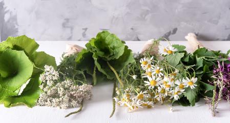 Bundles of fresh medicinal plants on the table