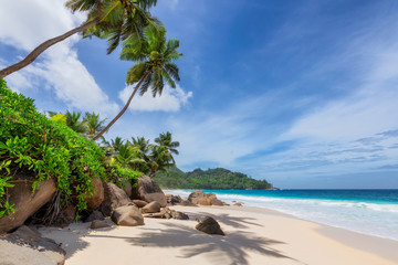 Wall Mural - Sunny beach with palm and turquoise sea in Seychelles. Summer vacation and tropical beach concept.