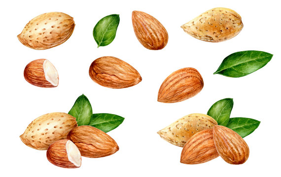 Almond set watercolor isolated on white background