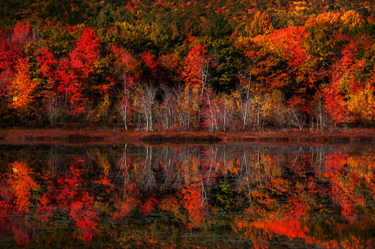 Colorful autumn forest by the lake. Reflection of red bright trees in the lake water. USA. Maine National park.