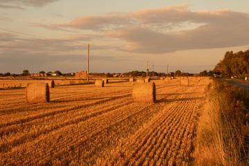 Golden Fields at Sunset