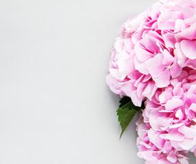 Canvas Prints Hydrangea Pink flowers of hydrangea