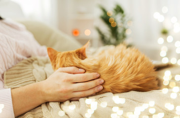 Fototapete - pets, hygge and people concept - close up of female owner with red tabby cat in bed at home