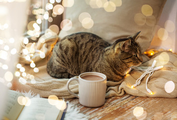 Fototapete - pets, christmas and hygge concept - tabby cat lying on window sill with book and garland lights at home