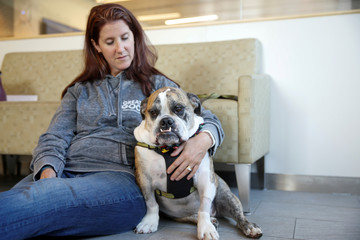 Moose, a six-year-old English Bulldog, waits with his owner to receive trial medical treatment in North Grafton