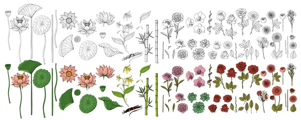 Big set of hand drawn doodle style flowers. Bamboo, lotus, dahlia, sweet pea, rose, peony. Isolated on white background. Stock vector illustration.