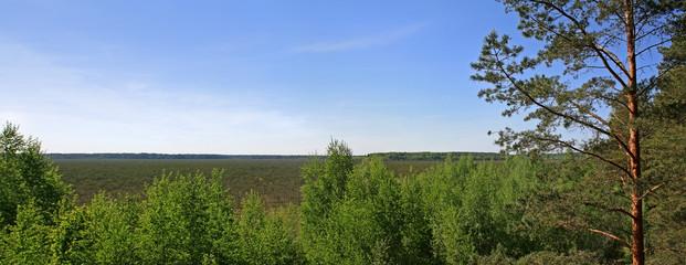 Panoramic landscape in Berezinsky Biosphere Reserve