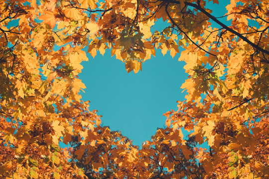 Autumn fall love background. Orange and yellow leaves in heart shape of background of blue sky. Heart-shaped sky through autumn trees in the park