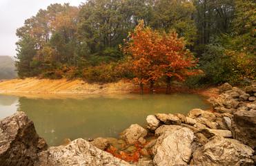 autumn colors Ataturk arboretum