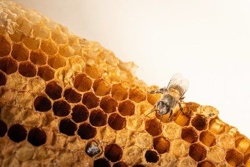 Closeup of honeycomb with bee and honey. Selective focus, copy space.