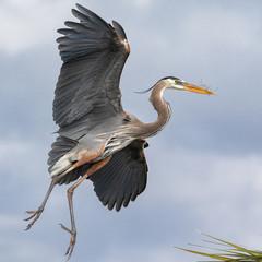 Recess Fitting Bird Great Blue Heron