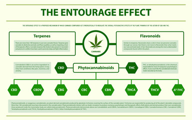 The Entourage Effect horizontal infographic illustration about cannabis as herbal alternative medicine and chemical therapy, healthcare and medical science vector.