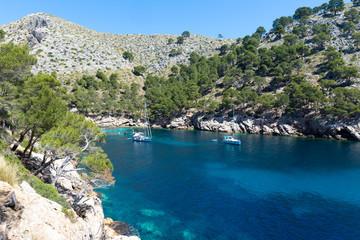 trees on the shore of Cala Murta Bay in Majorca
