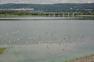 Birds on Ujezd dam near czech city of Chomutov on end of summer on 8th september 2019