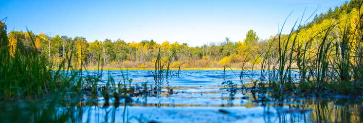 Blue forest lake on a beautiful sunny day. Trees with yellow leaves on the shore. Low viewing angle near the surface of the water.