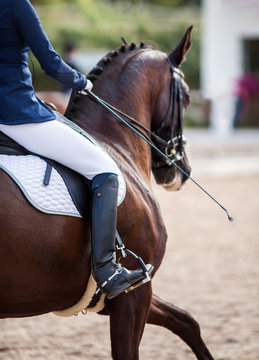A red sports horse with a bridle and a rider riding with his foot in a boot with a spur in a stirrup.