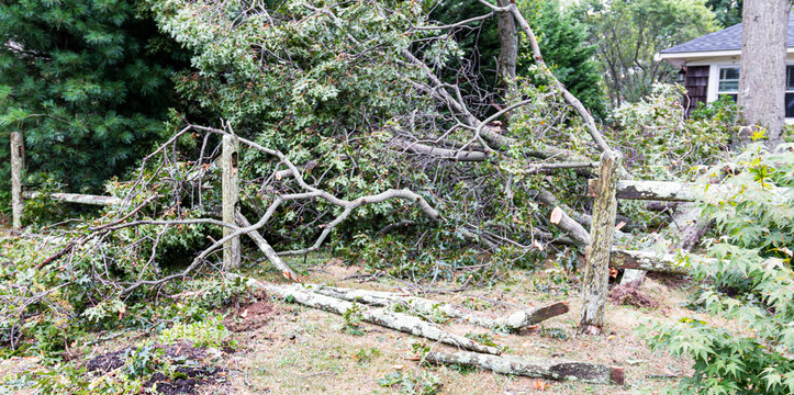 Trees fall on to fence in front yard during storm