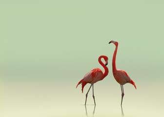 Fototapeten Flamingo Flamingo couple on smooth flat background