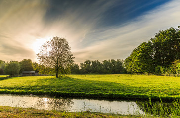Sunrise on meadow with sunlight through crown of solitary plane tree, Platanus, with forest edge in background and a sky with clear blue and faded veil clouds
