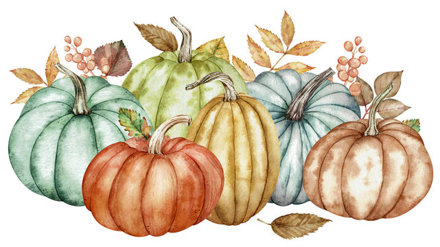 Watercolor composition of colorful pumpkins and autumn leaves. Botanical illustration.