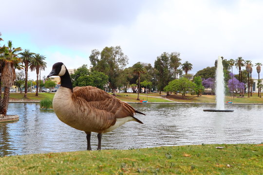 funny scene from MacArthur Park located in the Westlake neighborhood of LOS ANGELES, California